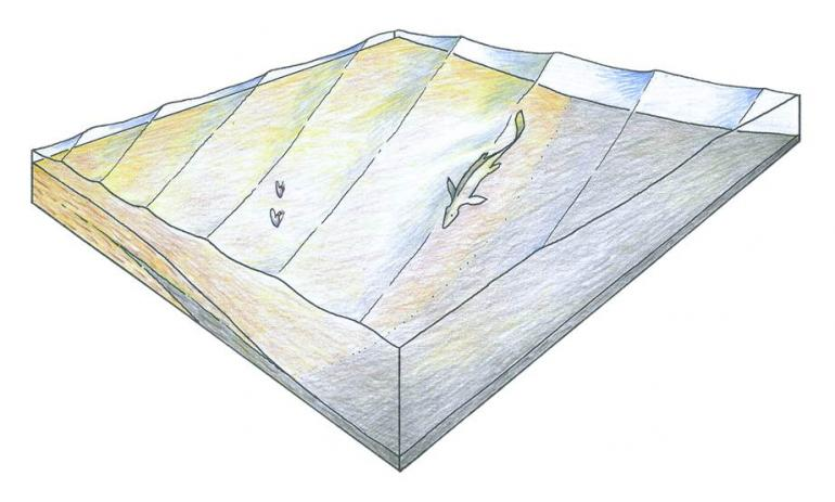 Photo provided by Boquillas Formation Block Diagram by Tom Lehman (1987)