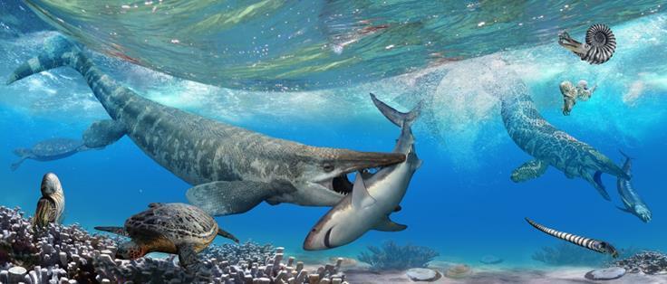 Photo provided by Tylosaurus (left) and Platecarpus (right) mosasaurs by Julius Csotonyi & Alexandra Lefort