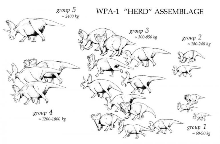 Photo provided by Schematic of Agujaceratops herd by Tom Lehman (2007)