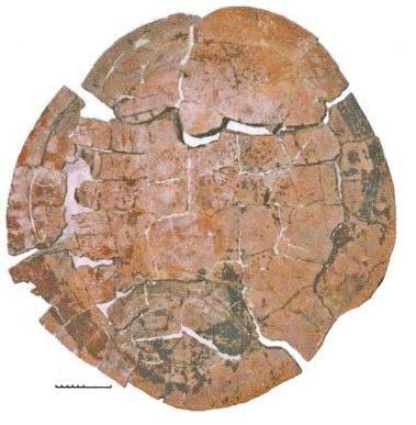Photo provided by Photo of the fossil shell of Chupacabrachelys by Tom Lehman and Steve Wick (2010)