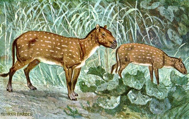 Photo provided by Hyracotherium: a primitive horse relative