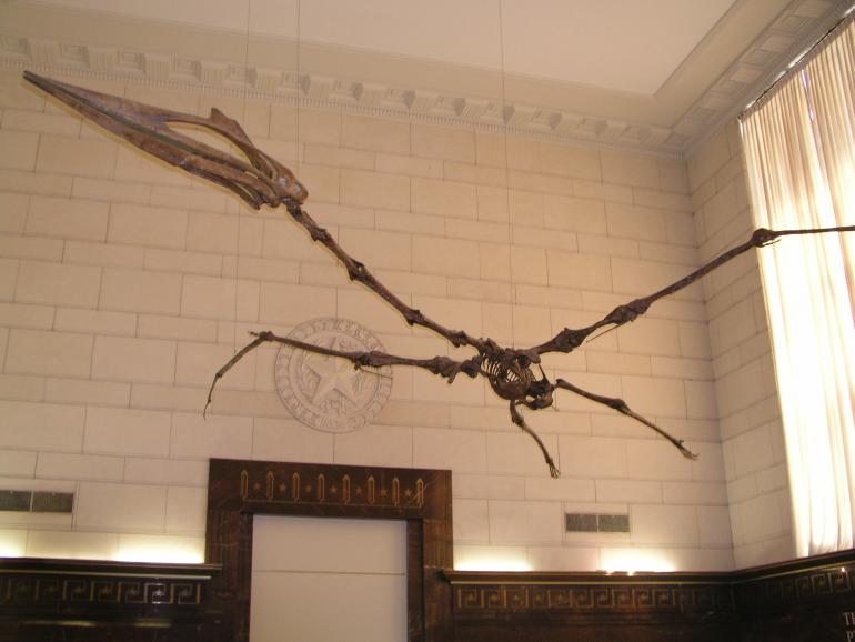 Photo provided by Quetzalcoatlus in the Texas Memorial Museum